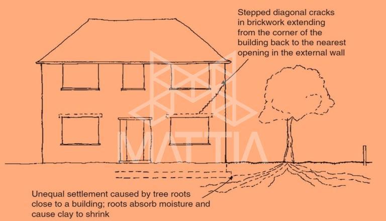 چگونه می توانیم از مشکلات ناشی از ریشه گیاهان در ساختمان جلوگیری کرد؟